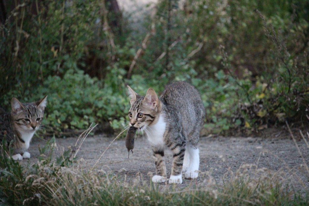 cat, souris film, pincer